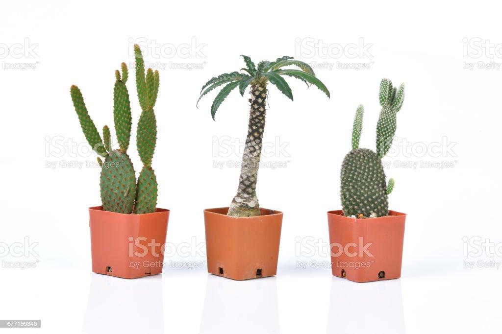 Cactus isolated on white background stock photo