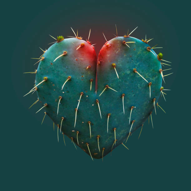Cactus Leaf in the Shape of a Heart Symbol of Love - Hope - Concept thorn stock pictures, royalty-free photos & images