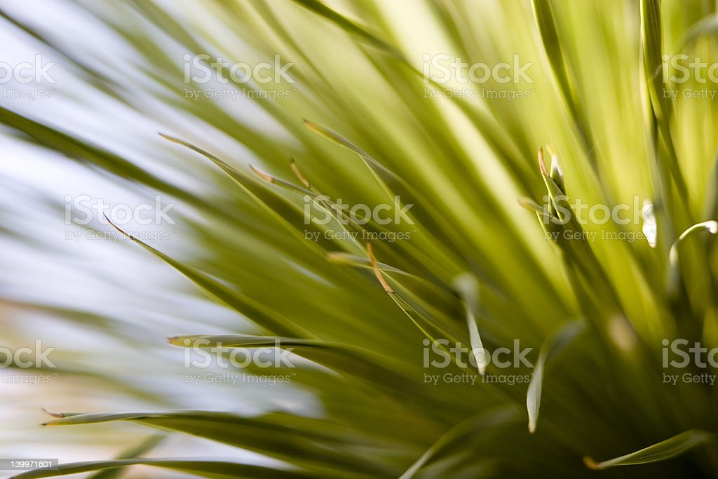 cactus leaves or grass royalty-free stock photo