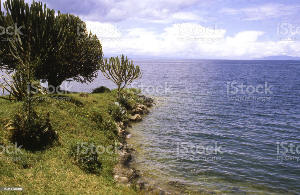 cactus like plants along lakeshore Lake Kivu Gisenyi Rwanda Africa stock photo