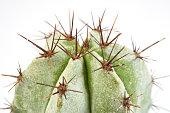 Cactus beautiful in nature close up.