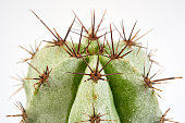 Macro photo of cactus and spines on blue background. close up.