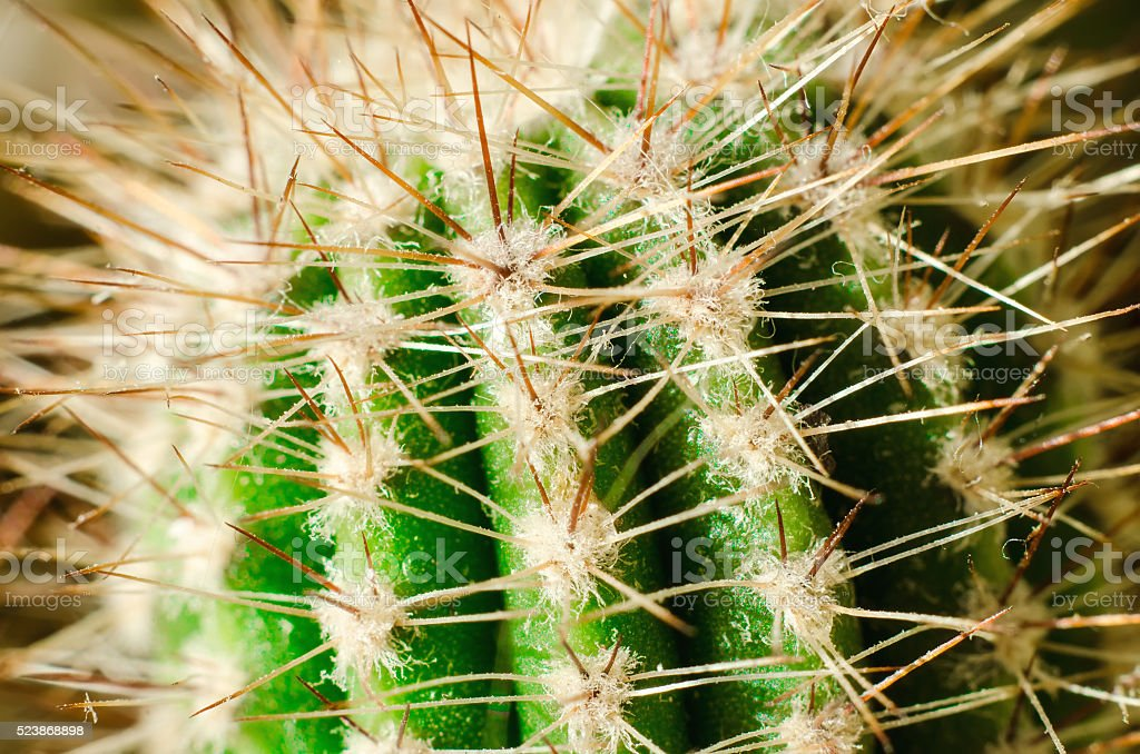 cactus macro stock photo