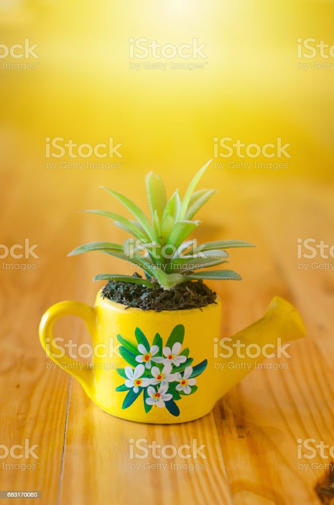 Cactus model for decorated on wooden table 免版稅 stock photo