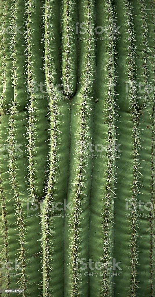 Cactus Needles close up stock photo
