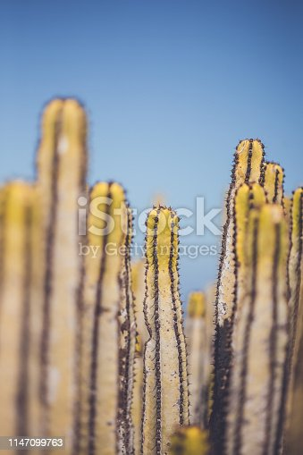 Cactus plant growing on an arid cliff