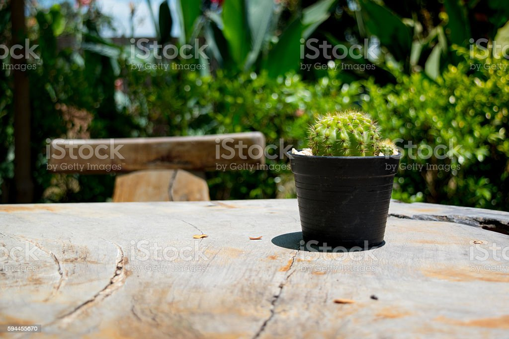 Cactus on a Wooden Table stock photo