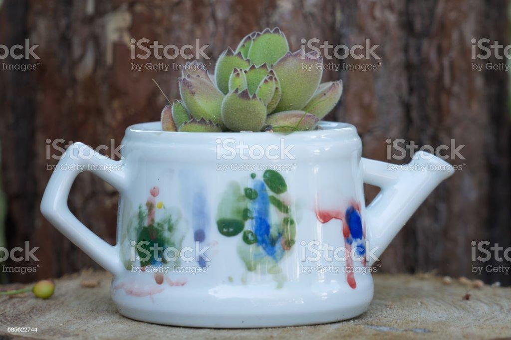 cactus on flower pot royalty-free stock photo