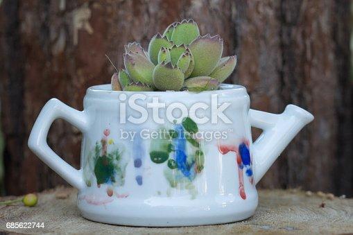 Cactus On Flower Pot - Fotografias de stock e mais imagens de Acima