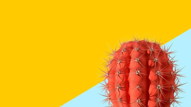 Cactus on geometric background minimal fashion concept surreal picture id1169066053?b=1&k=6&m=1169066053&s=612x612&w=0&h=fmpq9ruxkzach6edjx6cmiceso r1cmhspd2 39sx7g=
