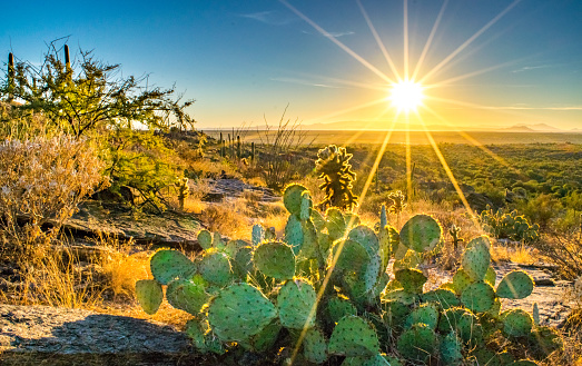Wide shot of a small cactus on rocky dry hillside in the Sonoran Desert at sunset - Saguaro National Park, Arizona, USA
