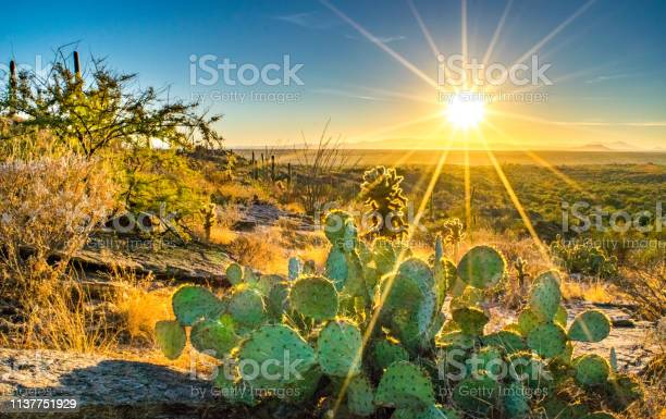 Photo of Cactus on Hill Overlooking the Sonoran Desert at Sunset
