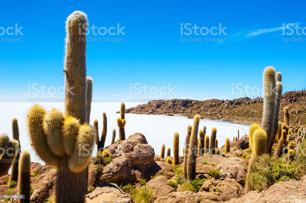 Cactus on Incahuasi island, Salar de Uyuni, Bolivia royalty-free stock photo