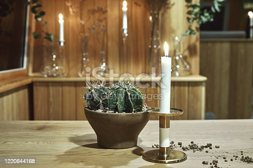 cactus on table in cafe for copy space.