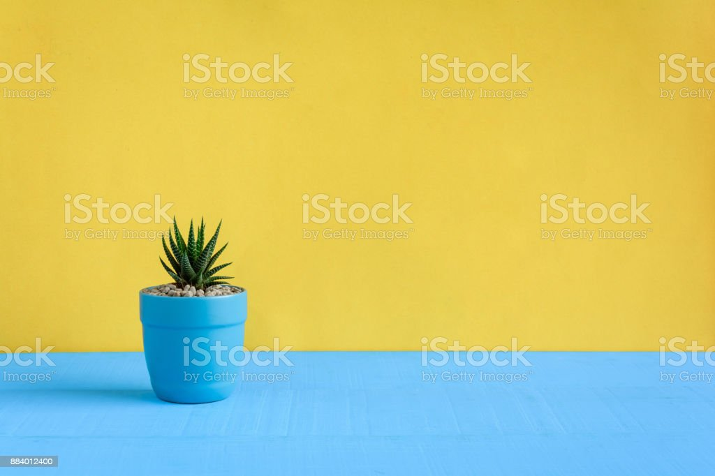 Cactus on the desk with yellow wall background stock photo