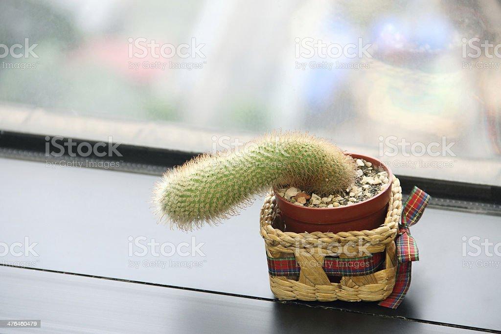 Cactus on the edge of window royalty-free stock photo