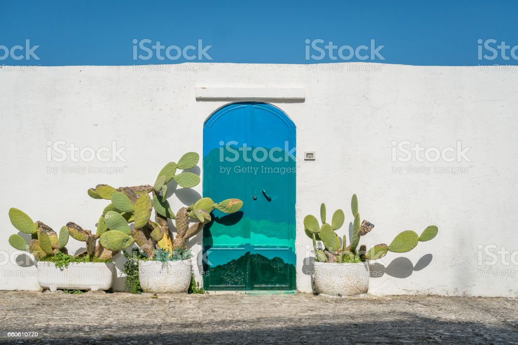 Cactus on the white wall stock photo