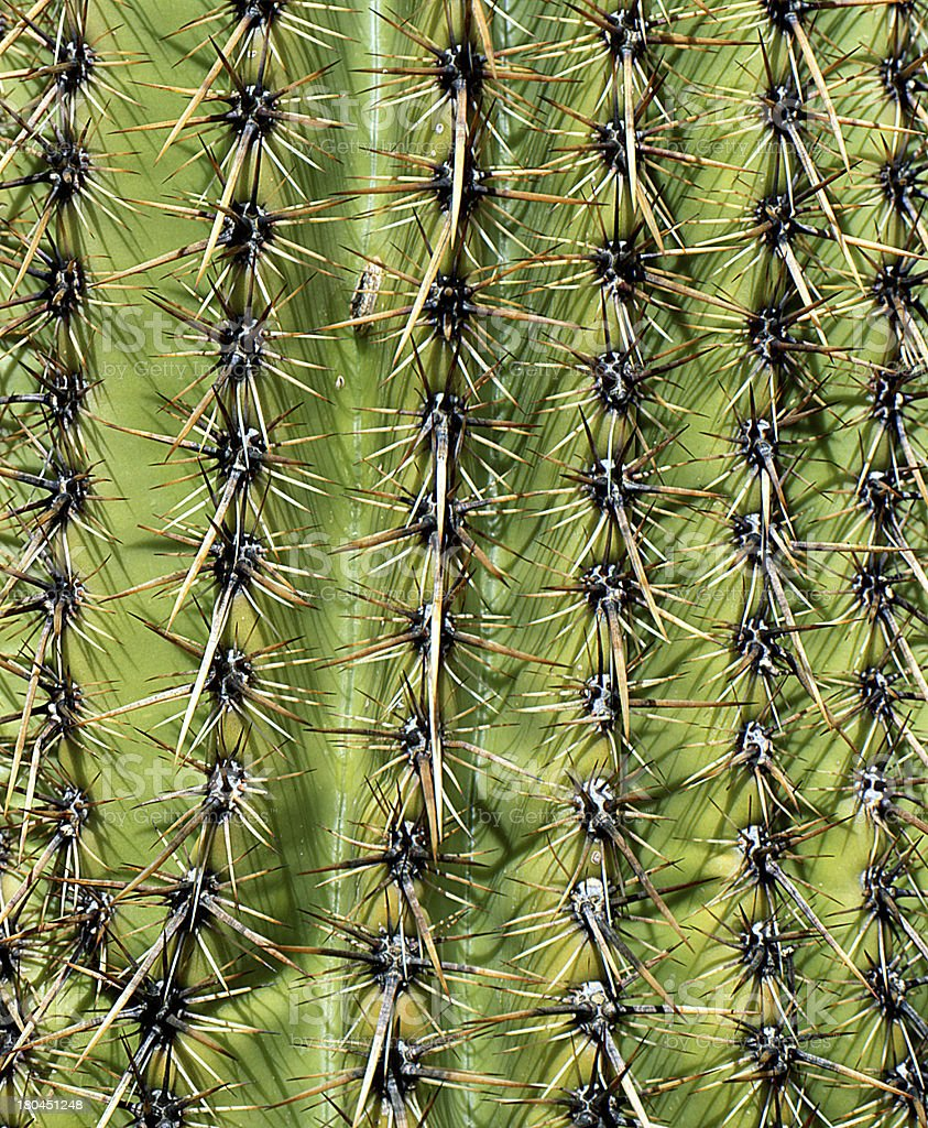 Cactus pattern stock photo