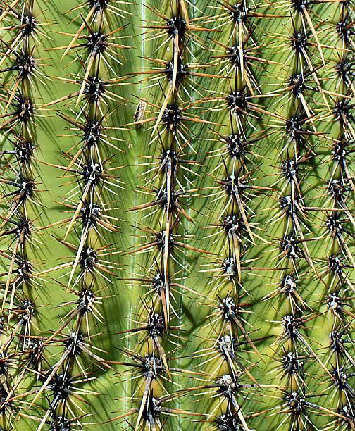 Cactus pattern stock photo