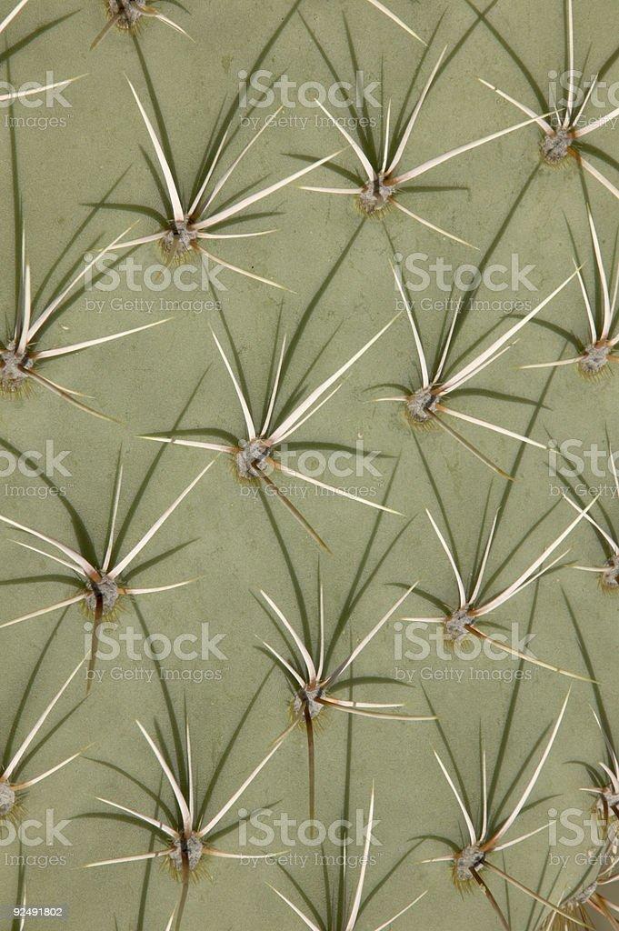 Cactus pattern royalty-free stock photo