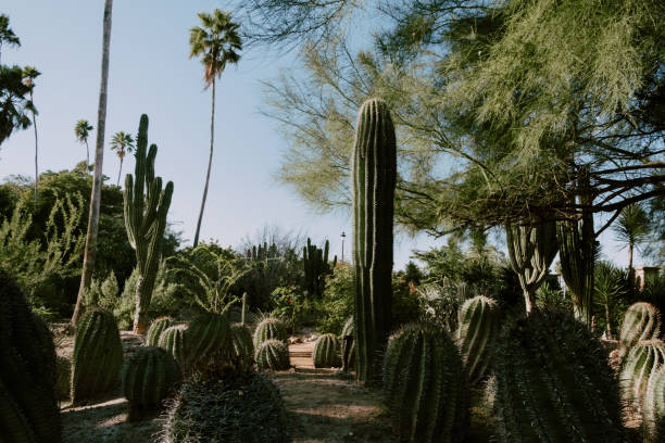 Cactus - foto de stock