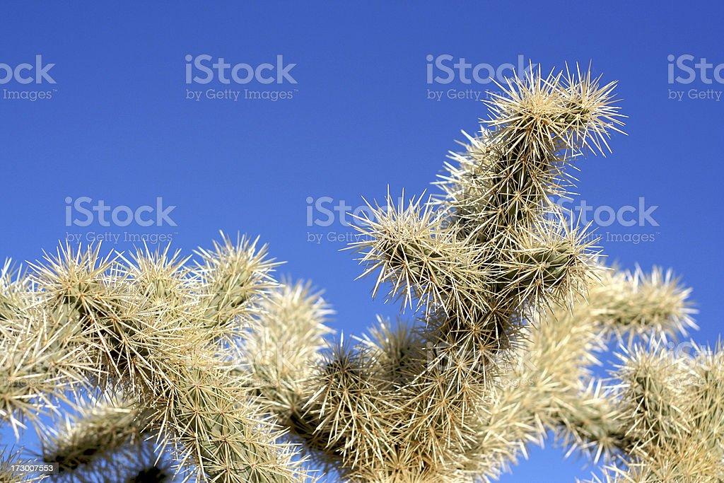 Cactus – Foto