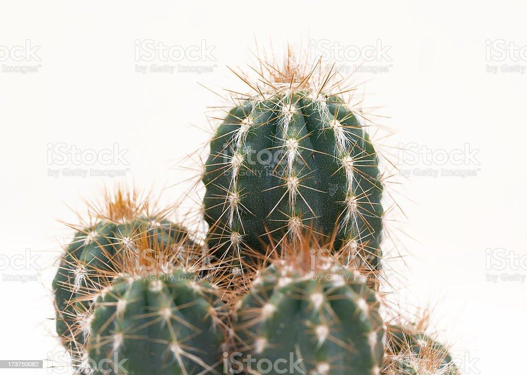 Cactus - foto stock