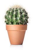 istock Cactus 498427010