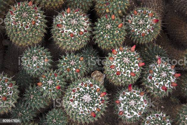 Free Desert Botanical Garden Images Pictures And Royalty Free Stock Photos Freeimages Com