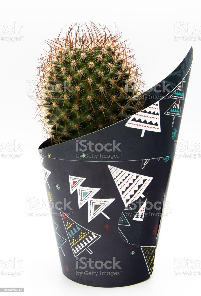 Cactus foto de stock royalty-free