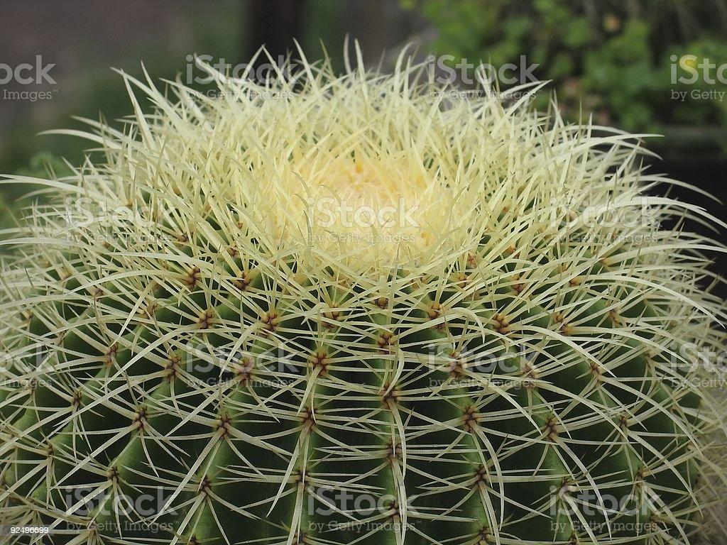 Cactus Lizenzfreies stock-foto