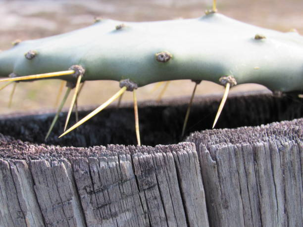 cactus - dianna dann narciso stock pictures, royalty-free photos & images