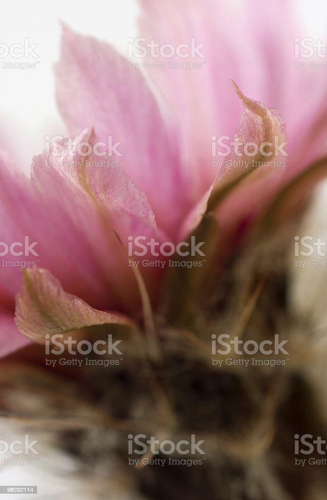 cactus foto stock royalty-free