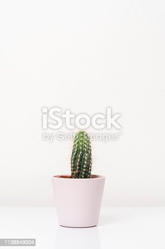 Cactus plant against white background
