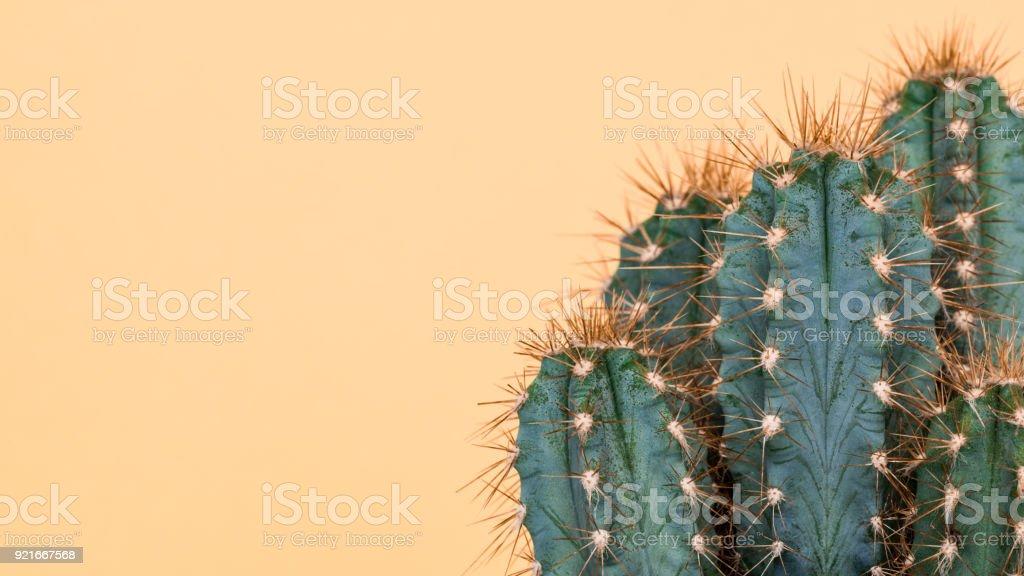 Kaktus Pflanze hautnah. Trendige gelbe minimaler Hintergrund mit Kaktus Pflanze. – Foto