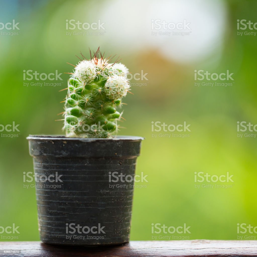 cactus plant flower i stock photo