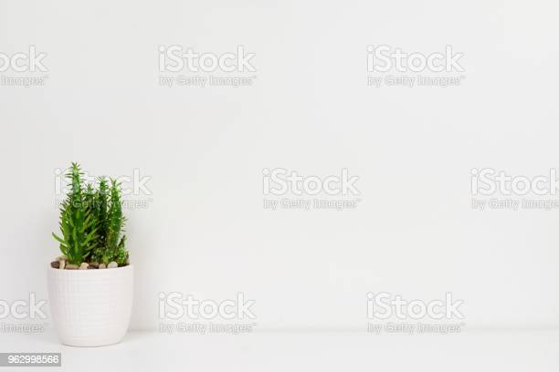 Cactus plant in a white pot on shelf against a white wall picture id962998566?b=1&k=6&m=962998566&s=612x612&h=imbiafolxpdizpp3ltkxh3pwtdkm8kkolm1ckkgght4=