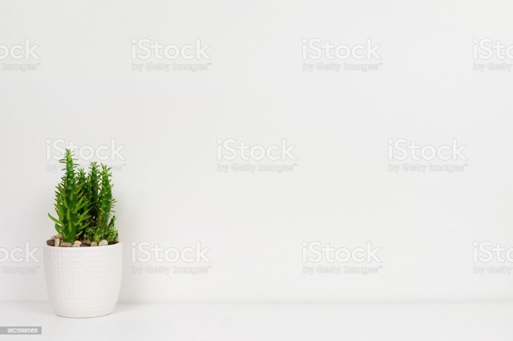 Cactus plant in a white pot on shelf against a white wall stock photo