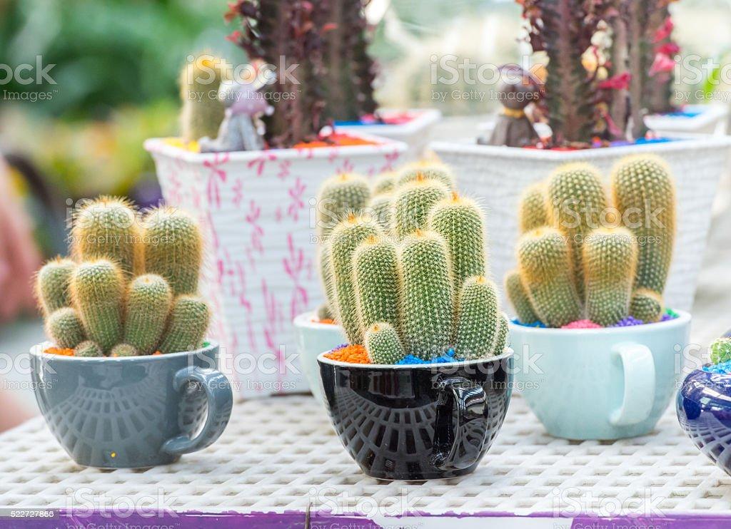 Cactus plant in flowerpot stock photo