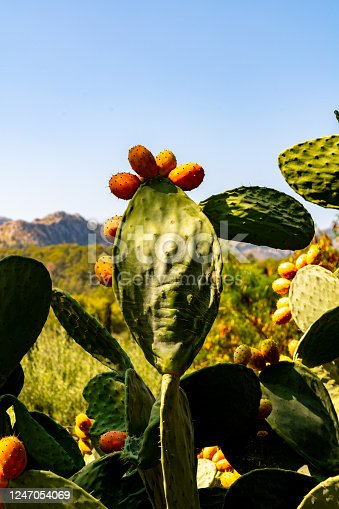 Cactus plant in front of mountain