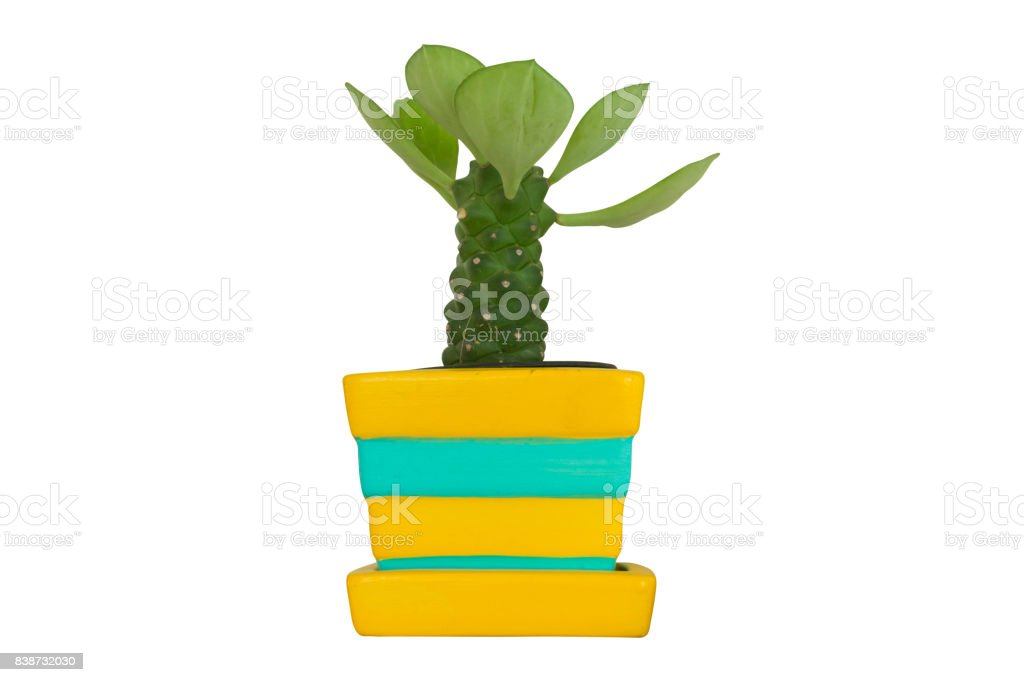 cactus plant in pot isolated on white background stock photo