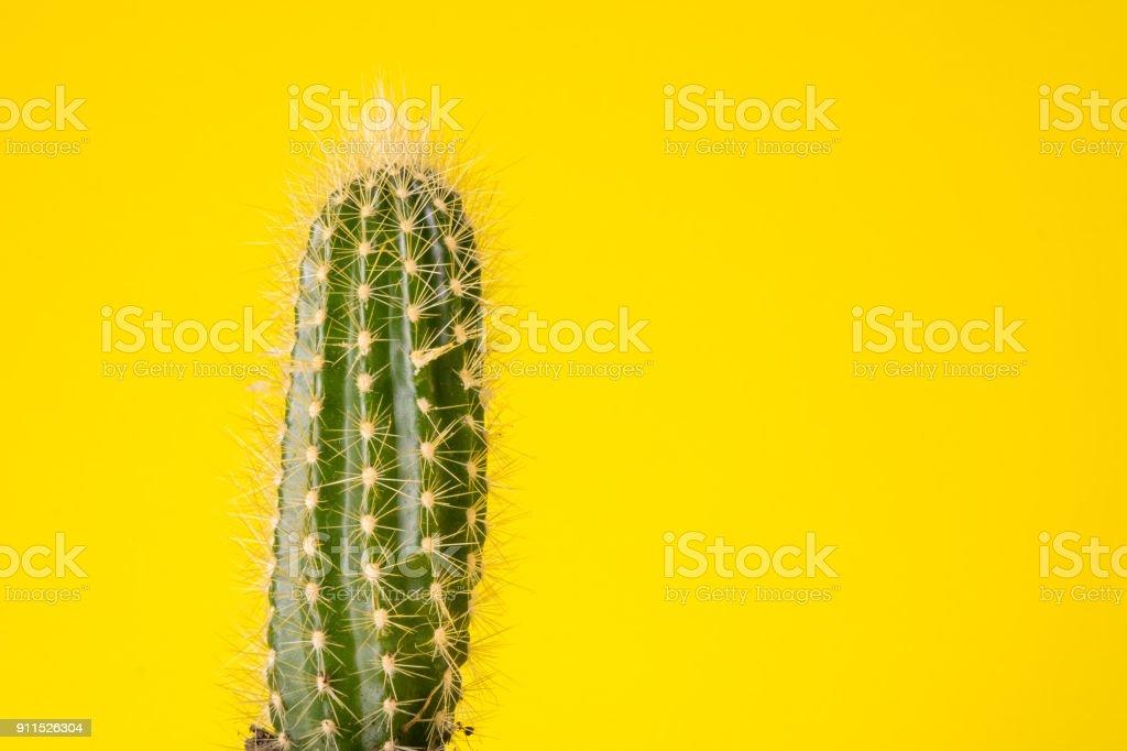 planta de cactus aislado - foto de stock
