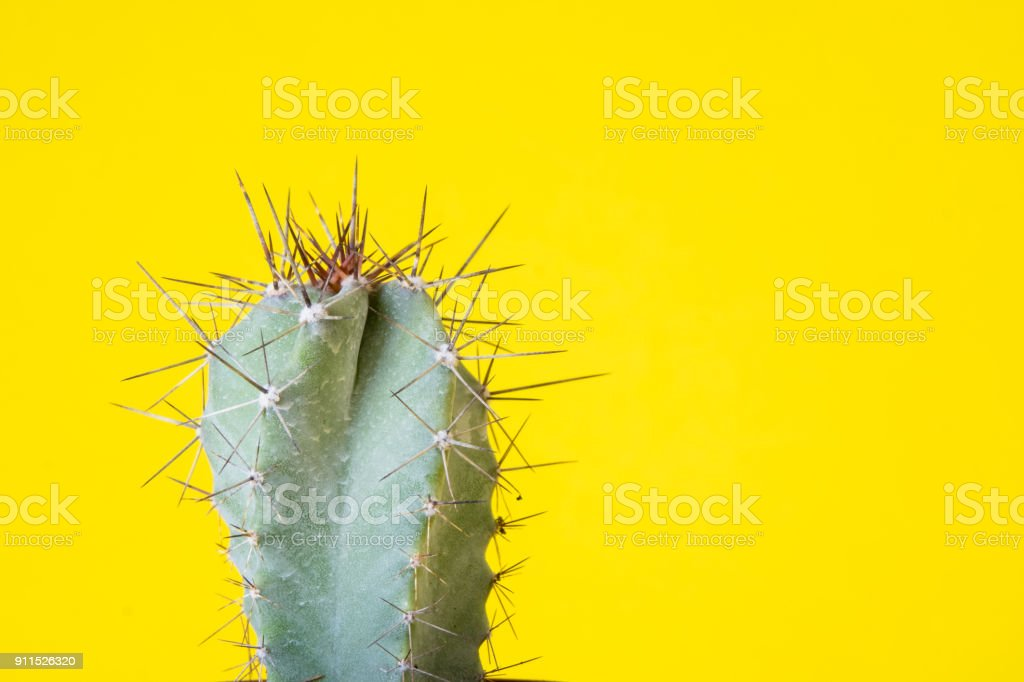 cactus plant isolated stock photo