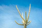 Cactus plant on a sky background. Summer image. Summer concept. Vintage colours