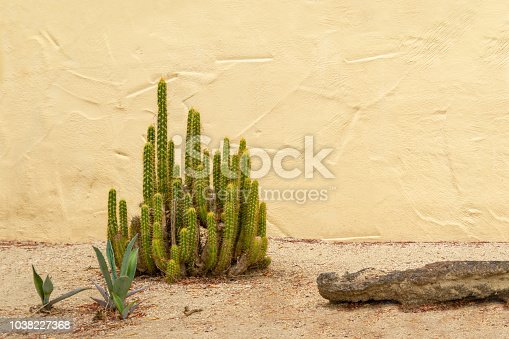 Cactus plant on sandy ground with a yellow stucco wall
