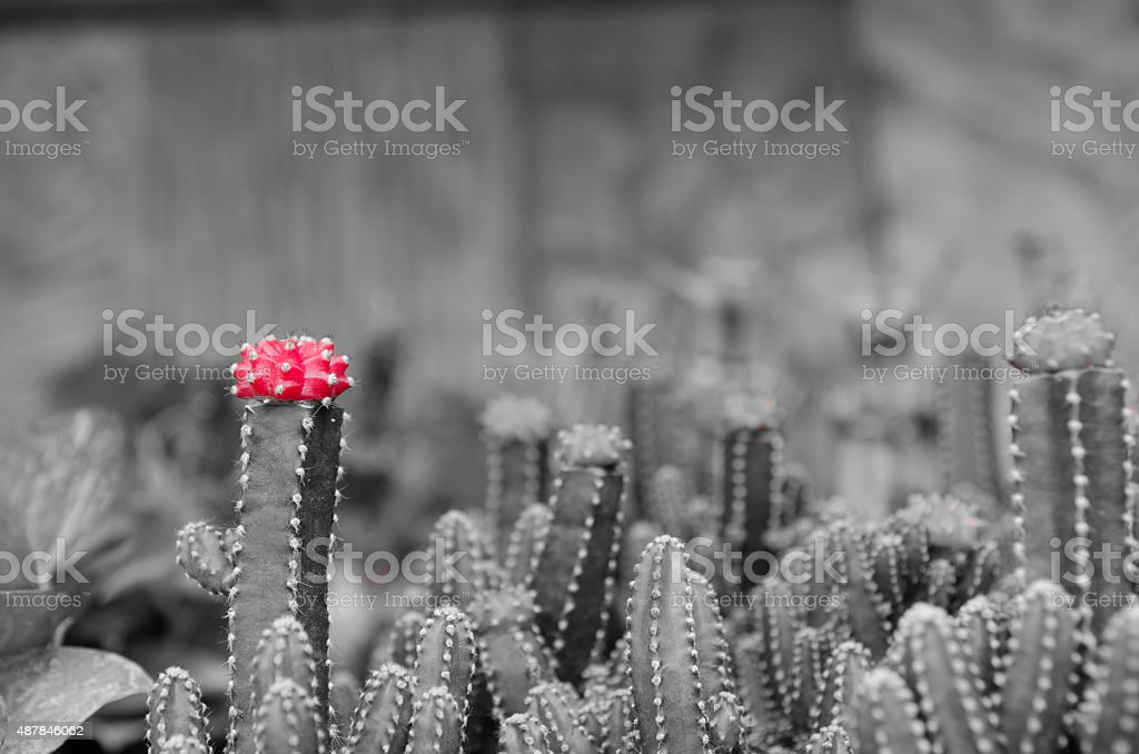 Cactus plant selective color area stock photo
