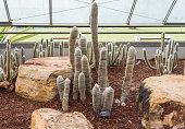 Cactus planted in an arid botanical garden