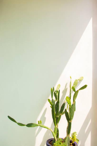 Cactus Planterior stock photo