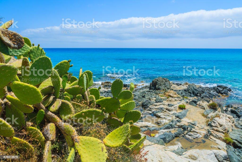 Cactus plants at Cala Sinzias bay and turquoise sea view, Sardinia island, Italy stock photo