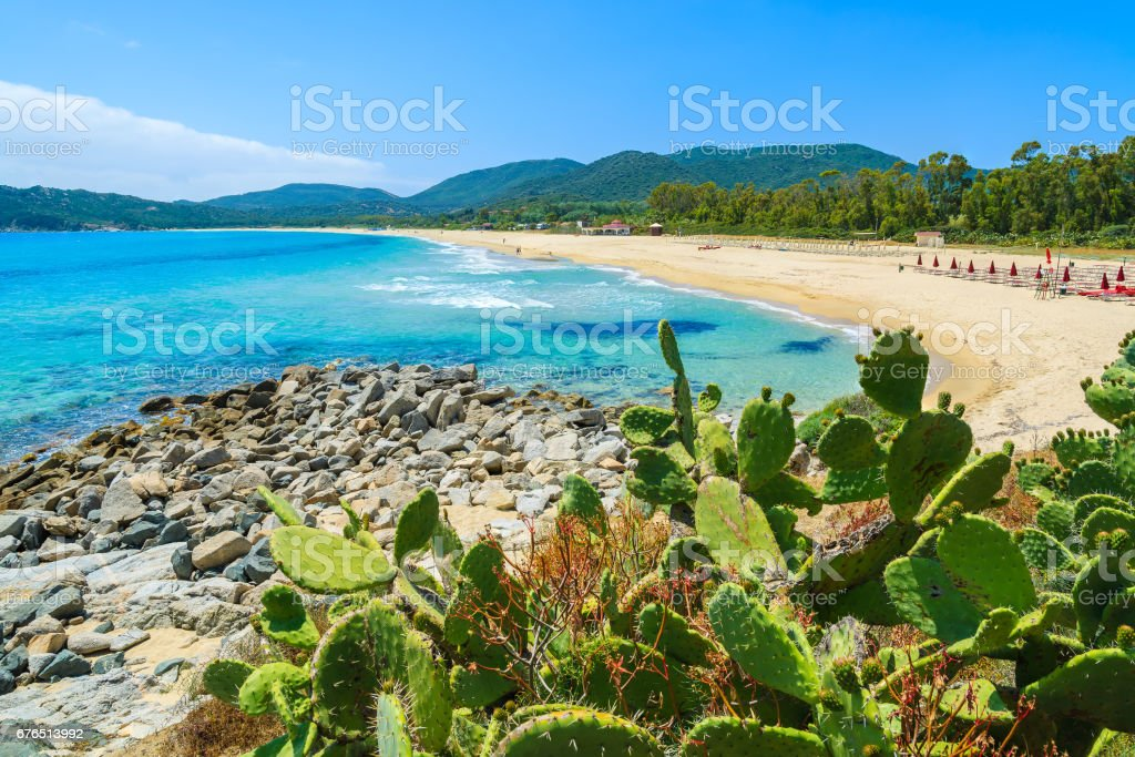 Cactus plants at Cala Sinzias sandy beach and turquoise sea view, Sardinia island, Italy stock photo